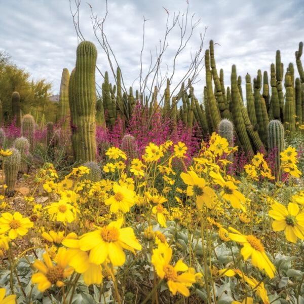 4 Desert Gardens in Arizona To Visit This Spring