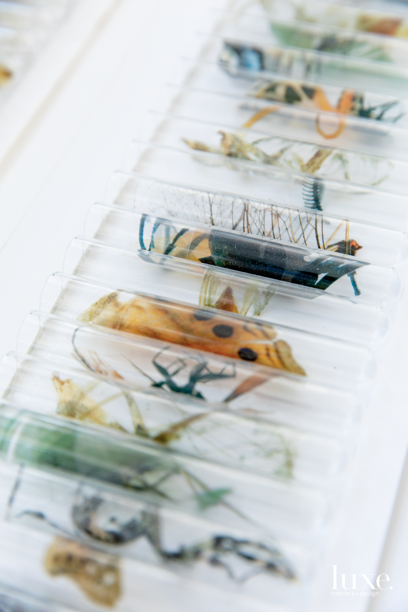 Test tubes with images of specimens native to Jerome will eventually be installed en masse.