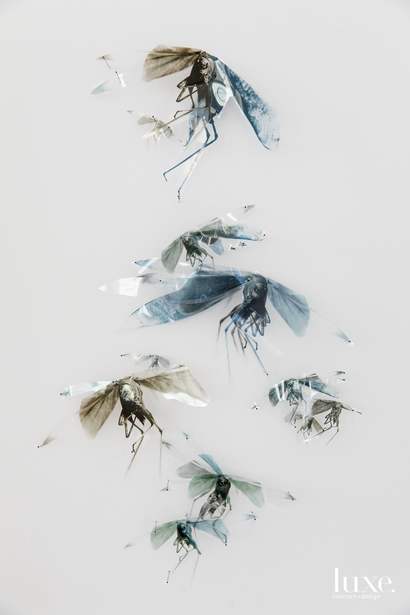 For his Progeny series, he hand-cut photographs of locusts and mounted them with insect pins.