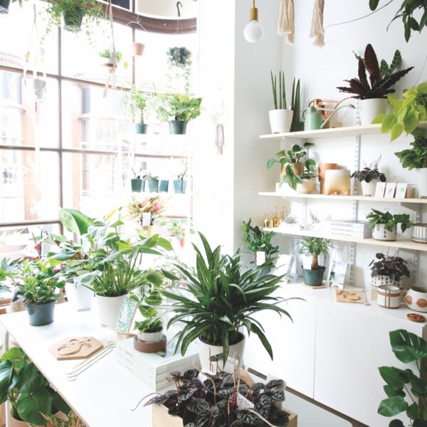 Step Inside Folia Collective's Mini Greenhouse Shop