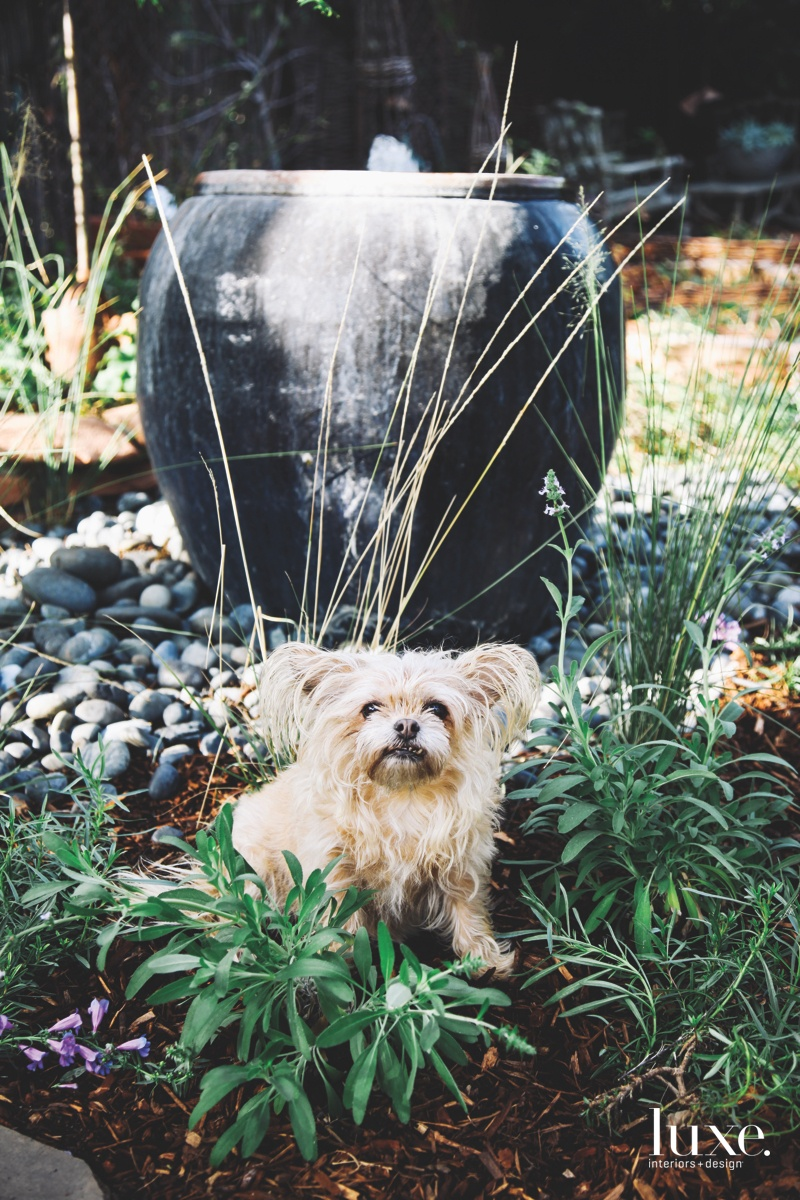 Leche, short for Dulce de Leche, a Brussels Griffon mix, sits near a fountain; he is one of several pets who populates the Freels' lives.