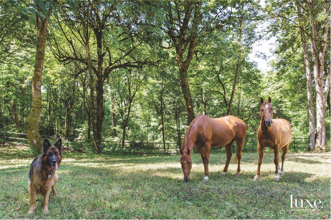 horses and dog landscape
