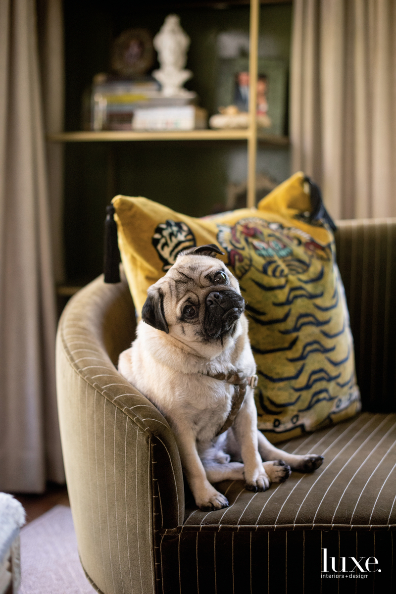 Her pug, Magellan, is a frequent studio companion.