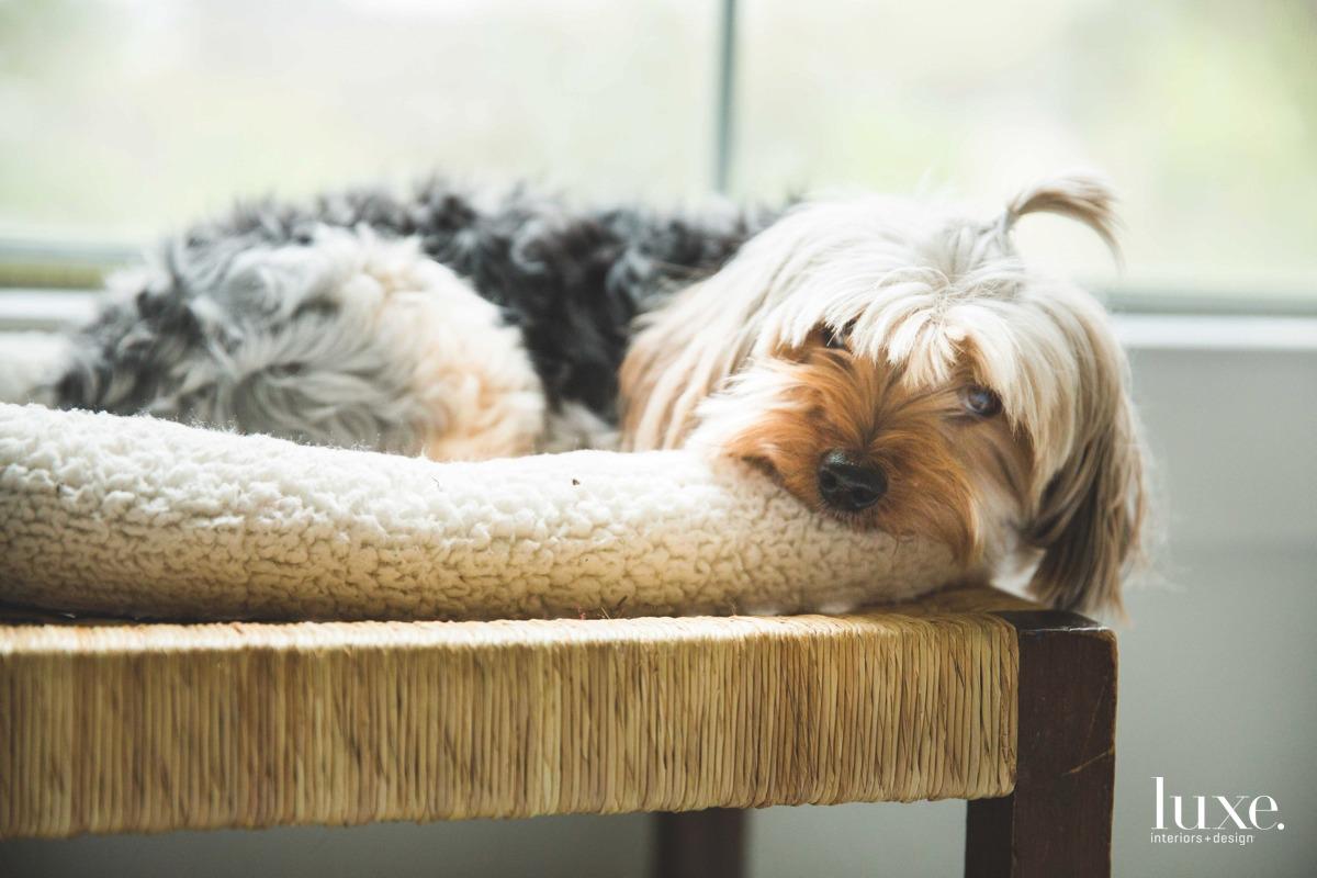 Her Yorkshire terrier-mix rescue, Mona Lisa, is a studio regular.
