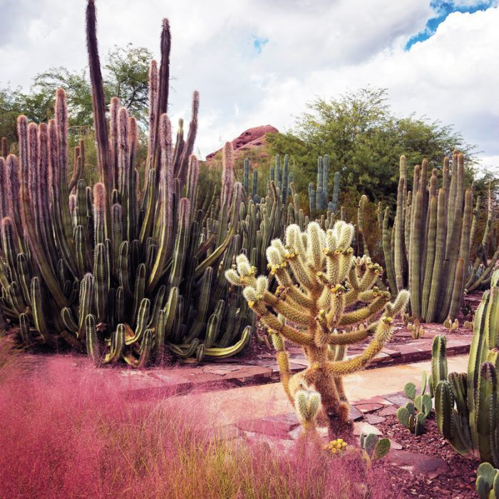 4 Desert Gardens in Arizona To Visit This Spring