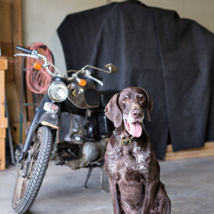 Wiedmann's dog, Otto, poses in the studio with a 1965 motorcycle.