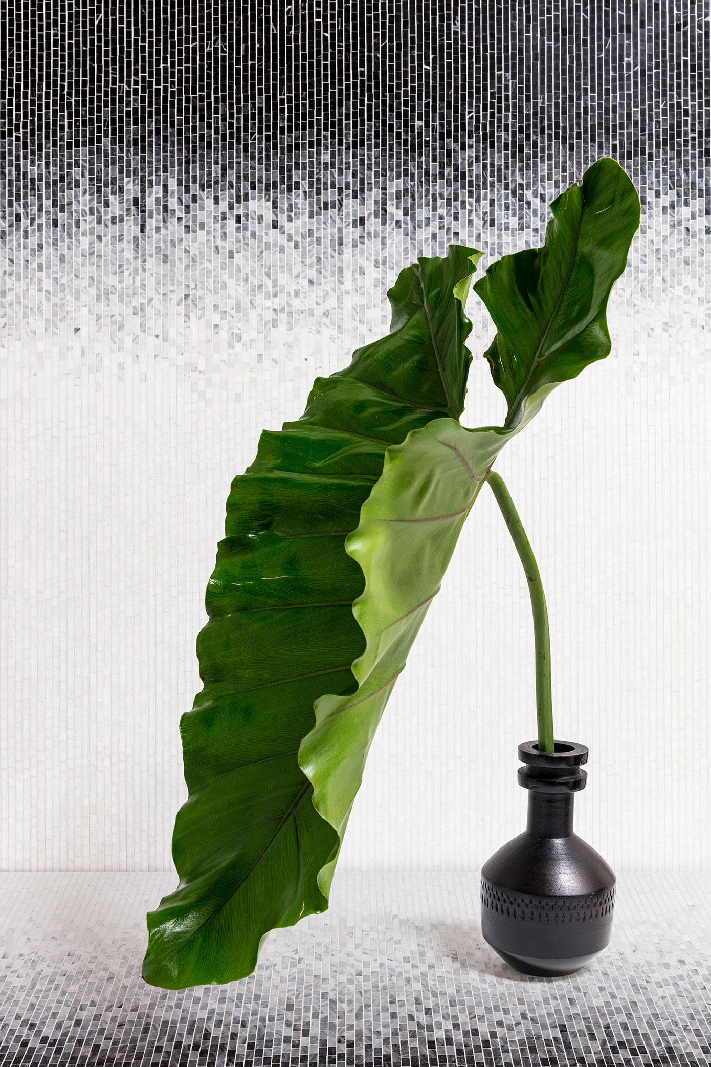 green plant black white tile