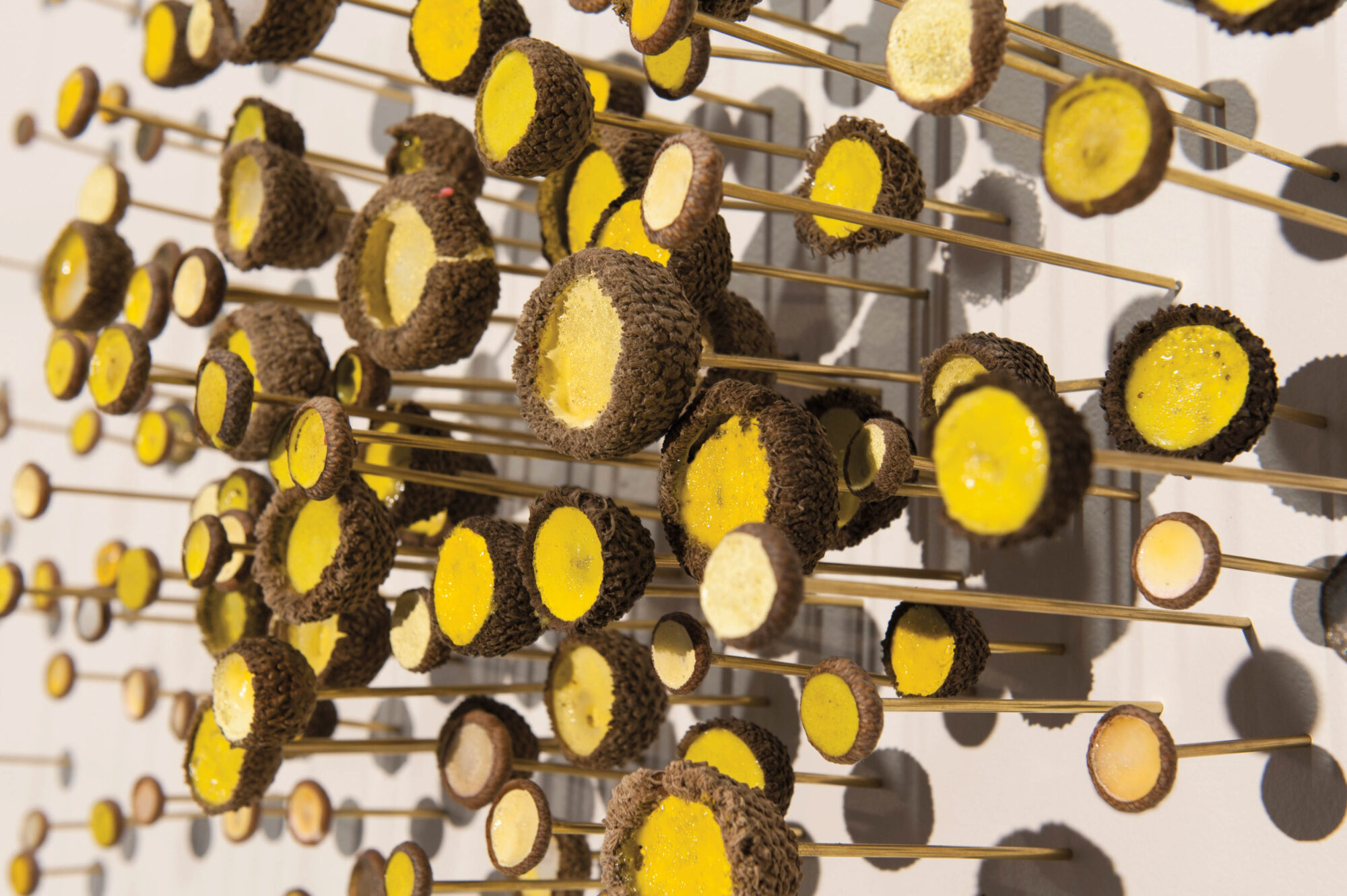 closeup shot of yellow and brain objects