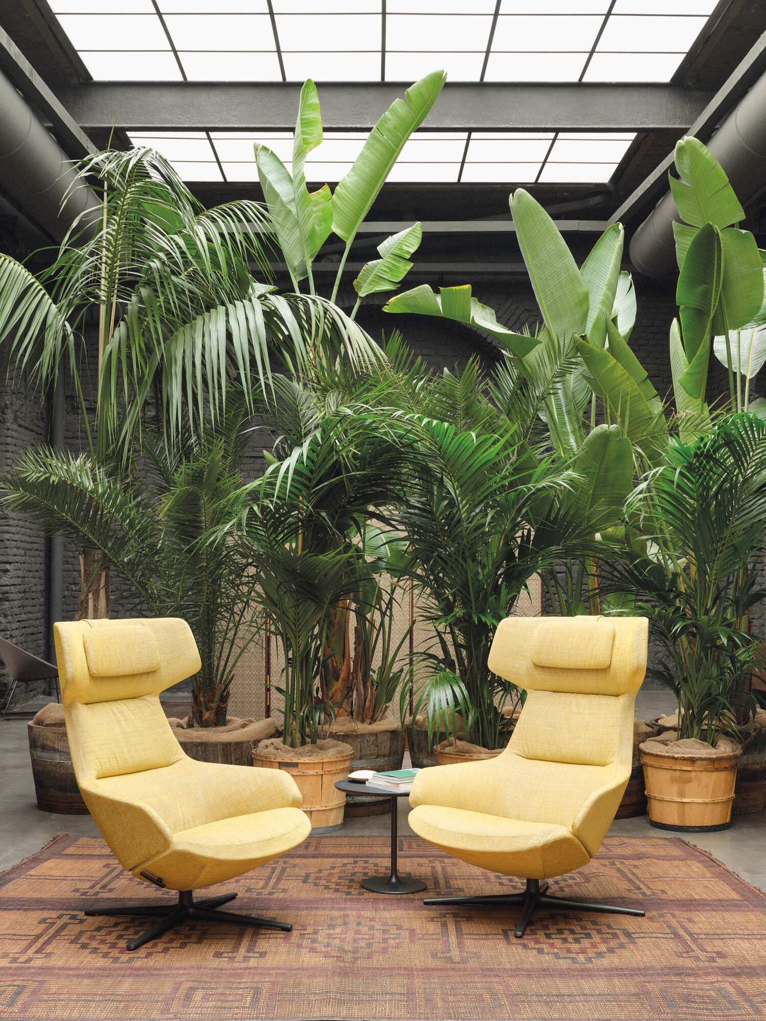photo of two yellow chairs in front of plants