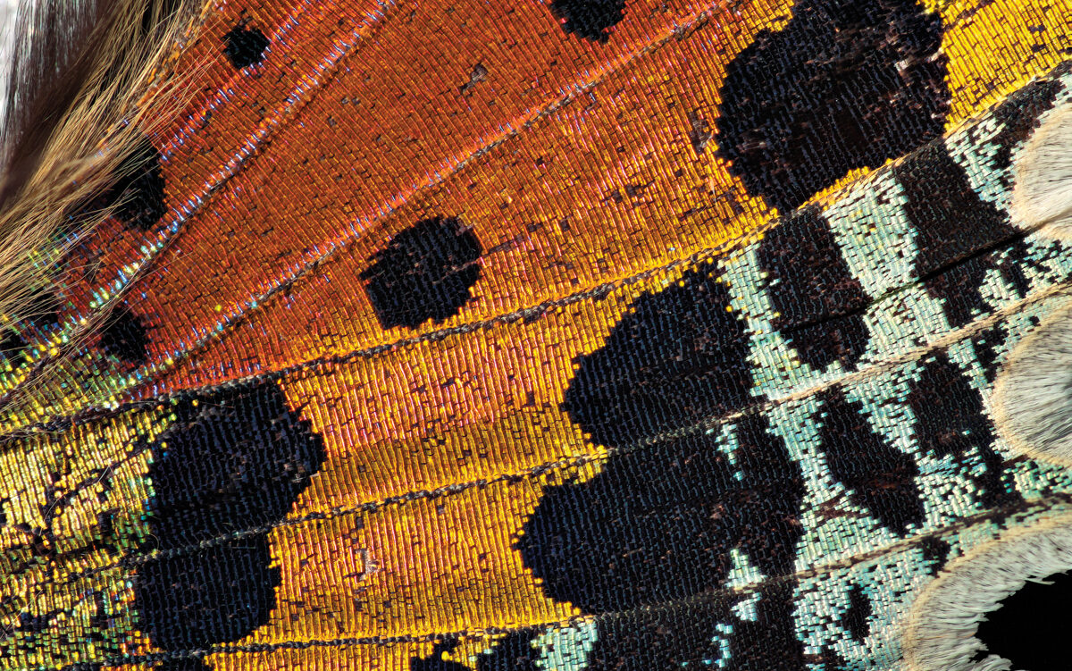 Let The Beauty Of A Butterfly Wing Inspire Your Latest Room Refresh