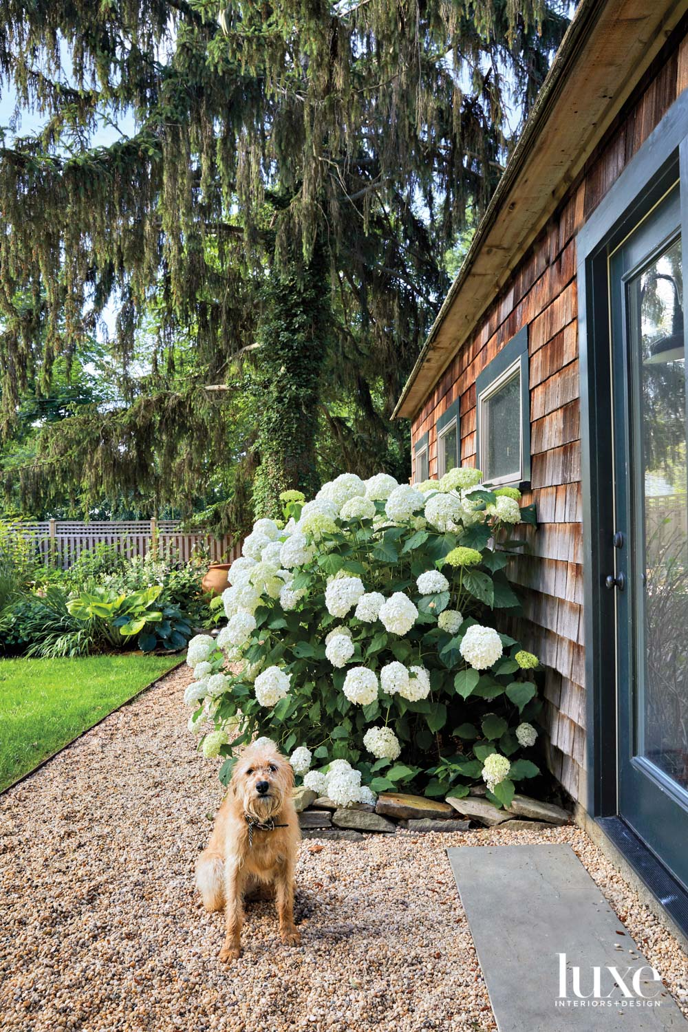 dog posed in front a hydrangea bush