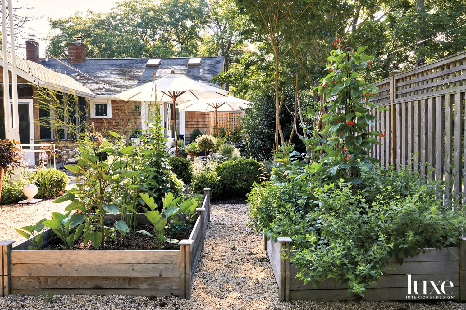 vegetable garden in plant boxes