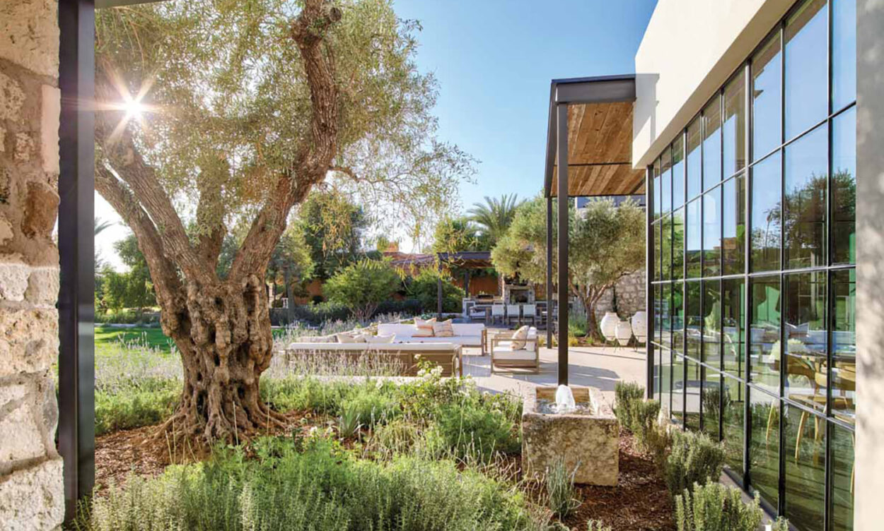 A furnished patio with a olive tree next to it.
