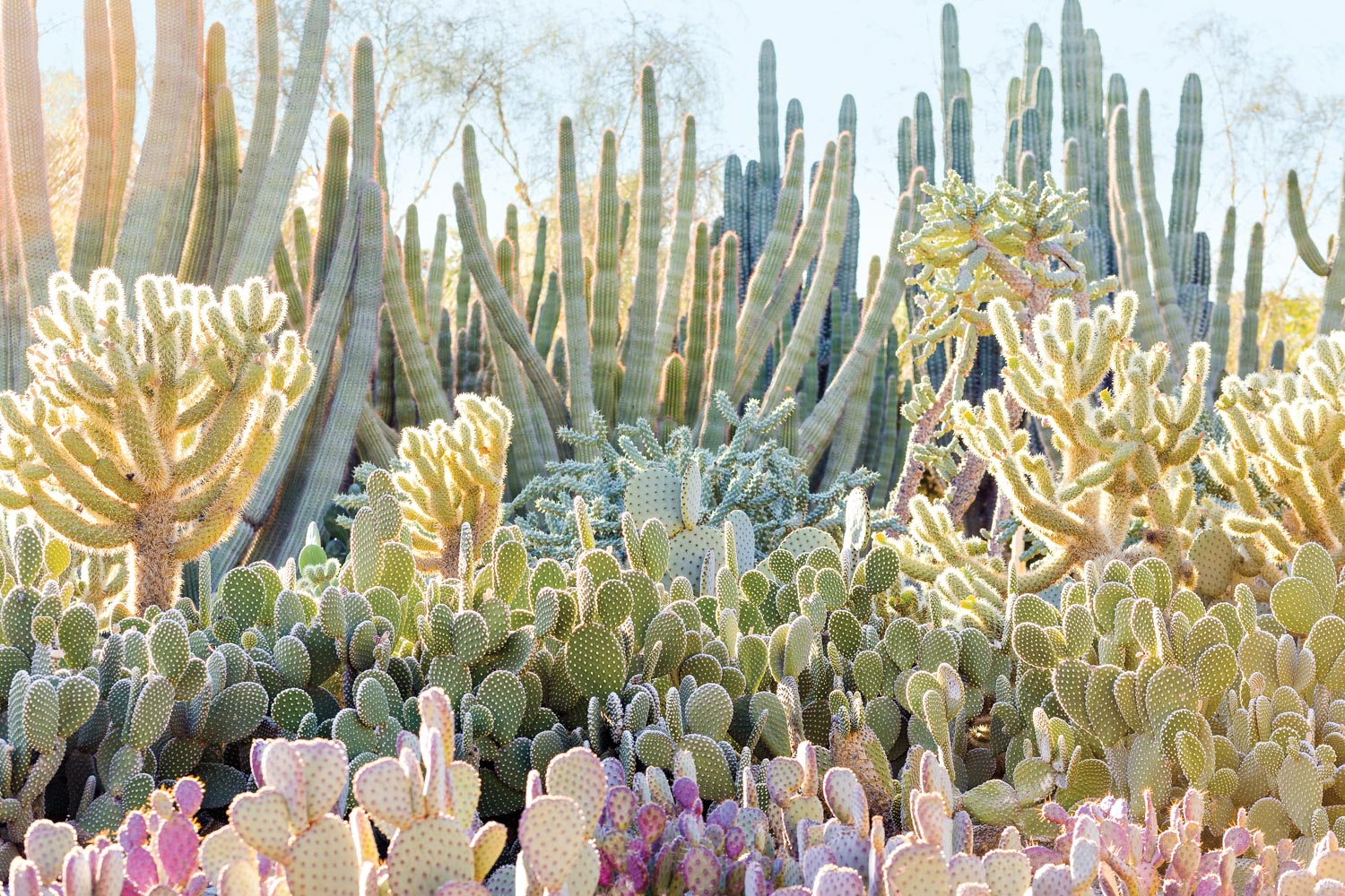 Assortment of large and small cacti outdoors